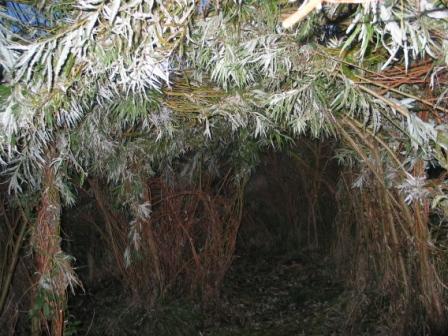 גדר ערבה - סוג של סוכה